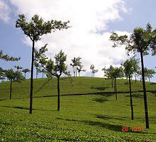 Tea Estate,Munnar by subratamondal