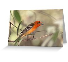 Flame-colored Tanager Greeting Card