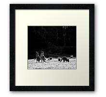 I know...I know...but aren't they cute! Framed Print