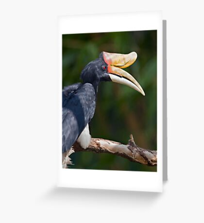 I Love My Beak... Greeting Card