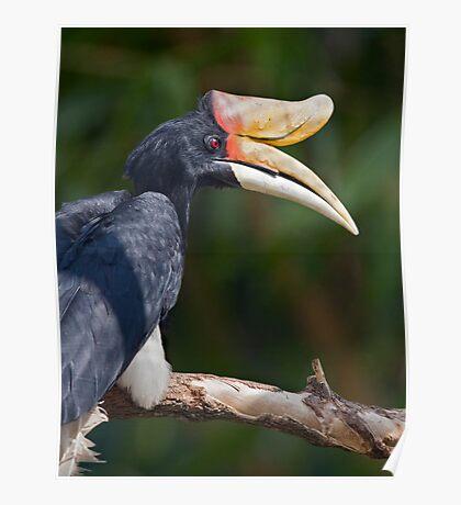 I Love My Beak... Poster