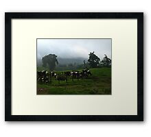 Cows  Clouds and Fog  Framed Print