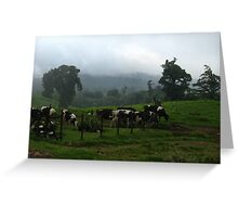 Cows  Clouds and Fog  Greeting Card