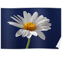 Daisy on Blue Poster