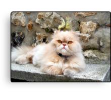 Sweet Persian cat Canvas Print