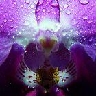 Purple Rain by Tamara Travers