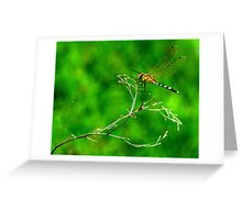 Deep in the sun-searched growths ... Greeting Card