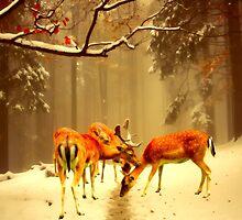 Fallow Deer by shalisa