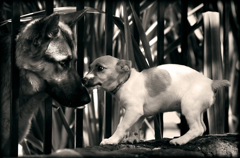 Good Fences Make Good Neighbours by micklyn