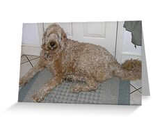 Well-trained Labradoodle Greeting Card