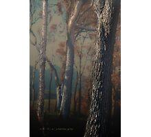 Hidden Forest © Photographic Print