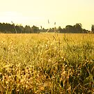 Field by CerbeR2008