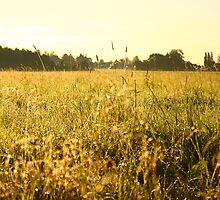 Field by CerbeR2008