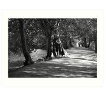 Woodlands Walk Art Print