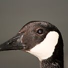 Canada Goose by Sean McConnery