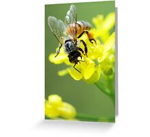 Bee on Yellow Greeting Card