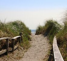 The Path To The Beach by roadsidestills