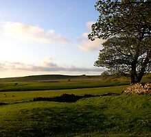 Sheepfold in Swaledale by Lindamell