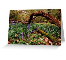 Early Bluebells Greeting Card
