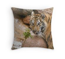 Stare Down Time!! Throw Pillow
