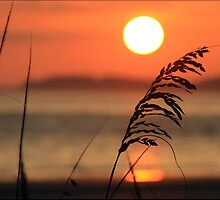~Sunset at South Beach HHI, SC~ by dragonflyriri