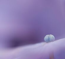 Resting on Purple by HelenaBrophy