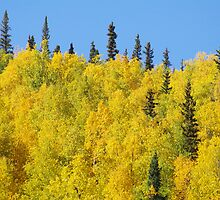 Alaskan Foliage by David McMahon