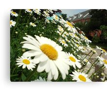 Daisy Day Canvas Print