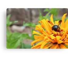 Bumble Canvas Print