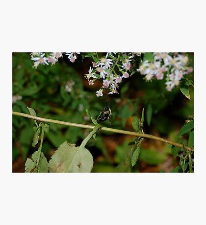 Bumble Photographic Print