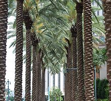 Towering Palms by Marlo510