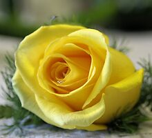 Yellow Rose by DJ Florek