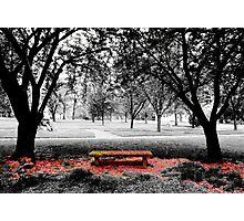 The Blossom - Berks, PA Photographic Print