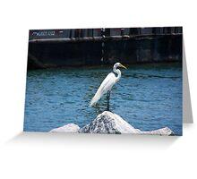 White Crane - Jetty Dweller Greeting Card