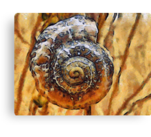 The Perfect Spiral Canvas Print