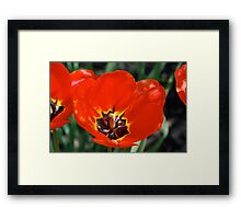 Stop and Smell the Tulips Framed Print