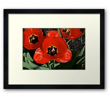 Seriously, Stop and Smell these Tulips Framed Print