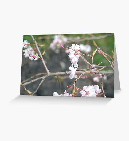 Japanese Cherry Greeting Card