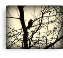 Bird in a Thorny Tree Canvas Print