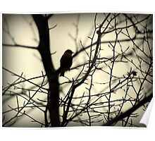 Bird in a Thorny Tree Poster