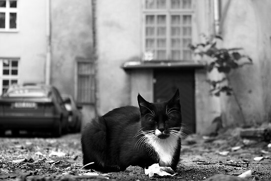 Just cat by CerbeR2008