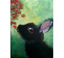 Curious Bunny Abstract Print Photographic Print