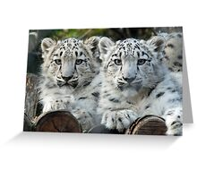 Snow Leopard Cubs Greeting Card