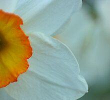 Flowerpot by Lita Medinger