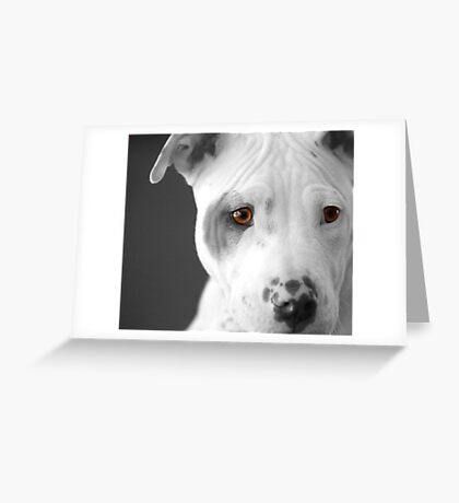 Freckles the Pit Greeting Card