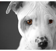 Freckles the Pit Photographic Print