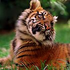 Tiger Cub by suz01