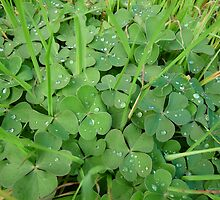 Clovers and raindrops by solena432