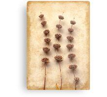 Dried Sage Metal Print