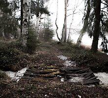 Misty Spring Morning in Finland by Janne Flinck